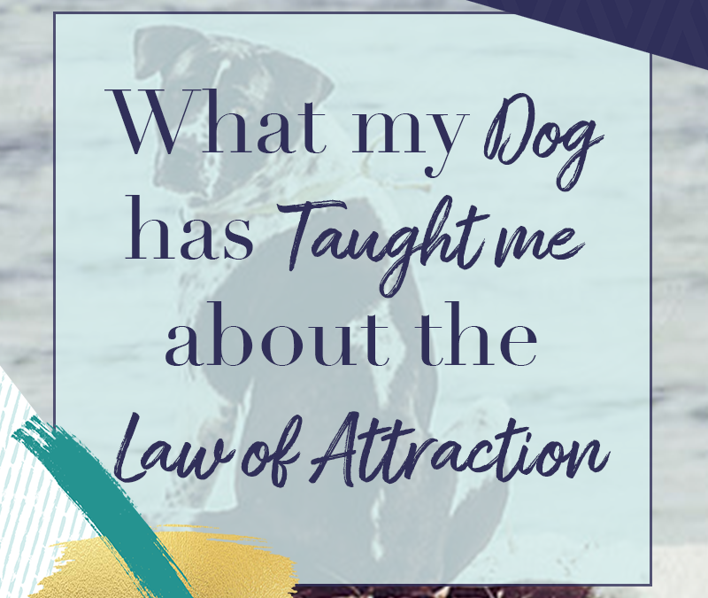 What my Dog has Taught me about the Law of Attraction